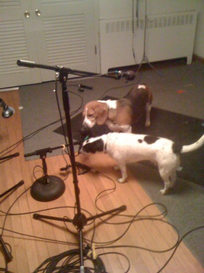 dogs recording
